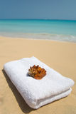 Shell with towel on beach. Photo of a shell with towel on beach Royalty Free Stock Image