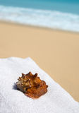 Shell with towel on beach. Stock Photo