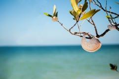 Shell Tree Fotografia Stock Libera da Diritti
