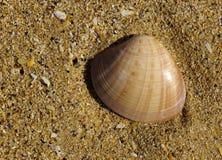 Shell trenzado de la almeja Fotografía de archivo libre de regalías