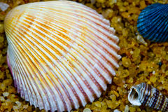 Shell Trio. A trio of uniquely contrasting shaped sea shells stock photos