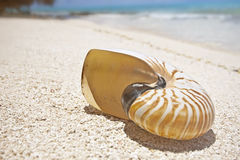 Shell on tropical beach Stock Photo