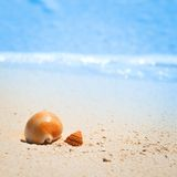 Shell on tropical beach Royalty Free Stock Photo