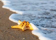 Shell on tropical beach Stock Photos