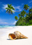 Shell Tropical Beach Nature Sea Concept Royalty Free Stock Photos