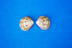 Shell twee op de blauwe achtergrond Royalty-vrije Stock Afbeeldingen