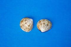 Shell twee op de blauwe achtergrond Stock Afbeeldingen