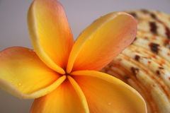Shell u. Blume Stockfoto