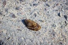Shell On un rompeolas concreto Fotografía de archivo