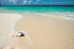 Shell in una spiaggia caraibica Fotografia Stock