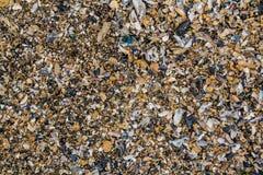Shell- und Kieselstein f?r Hintergrundbeschaffenheit lizenzfreie stockfotografie