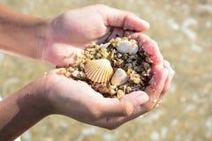Shell und Sand an Hand Stockbild
