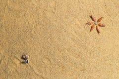 Shell- und Sandhintergrund Lizenzfreies Stockbild