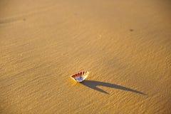 Shell und sein Schatten Lizenzfreie Stockfotos