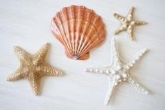 Shell und Starfishes Lizenzfreie Stockfotos