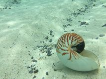 Shell under water. Shell sitting on the sand under water Royalty Free Stock Photo