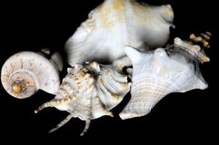 Shell , underwater, marine life stock photography