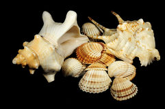 Shell , underwater, marine life stock images