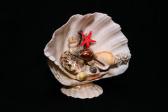 Shell. Underwater world created with shells Stock Photography