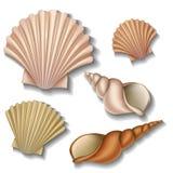 Shell uppsättning Arkivbilder