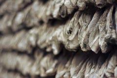 Shell vägg Royaltyfri Foto