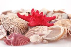 Shell van de kammossel Royalty-vrije Stock Fotografie
