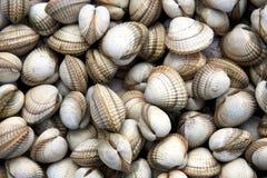 Shell van de kokkel achtergrond Stock Afbeeldingen