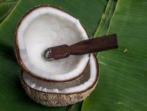 Shell van de kokosnoot Royalty-vrije Stock Afbeelding
