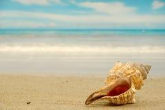 Shell van de kroonslak op strand stock afbeeldingen
