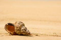 Shell van de kroonslak op tropisch strand (dichte omhooggaand) Royalty-vrije Stock Afbeeldingen
