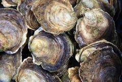 Shell van de oester achtergrond Stock Foto
