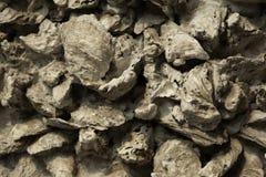 Shell van de oester muur Stock Foto's