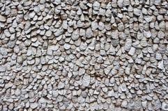 Shell van de oester muur Stock Afbeelding