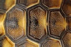 Shell van de schildpad stock afbeelding