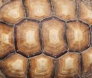 Shell van de schildpad Stock Fotografie