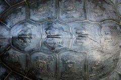 Shell van de schildpad royalty-vrije stock afbeeldingen