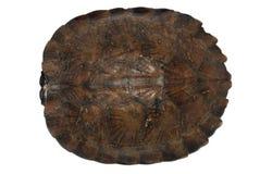 Shell van de schildpad Stock Foto