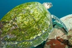 Shell van de schildpad detail royalty-vrije stock afbeeldingen