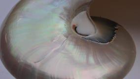Shell-van de de sectie spiraalvormige parel van nautilusfibonacci de symmetrie half dwars gouden verhouding de lengte van de stru stock footage