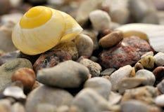 Shell van de slak Royalty-vrije Stock Afbeelding