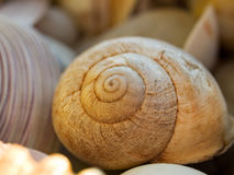 Shell van de slak Stock Afbeeldingen