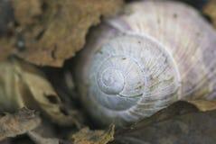 Shell van de slak Stock Foto's