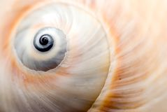 Shell van de slak Stock Foto