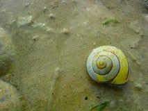 Shell van de slak Royalty-vrije Stock Foto's
