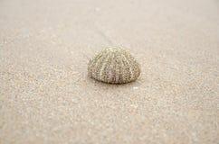 shell van de zeeëgel Stock Foto's