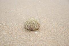 shell van de zeeëgel Royalty-vrije Stock Foto