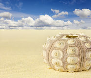 Shell van de zeeëgel op strand Stock Fotografie