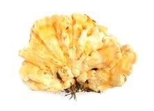 Shell van de zwavel sulphure van Laetiporus van de kippenpaddestoel Stock Afbeelding