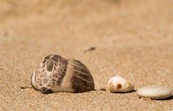 Shell van een zeeëgel Royalty-vrije Stock Fotografie