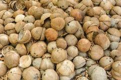 Shell van het kokosnotenfruit in de helft wordt gesneden die Royalty-vrije Stock Foto